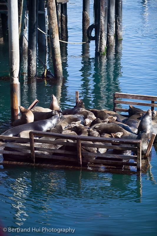 sea lions sunbathing outside Fisherman's Wharf in Monterey, California