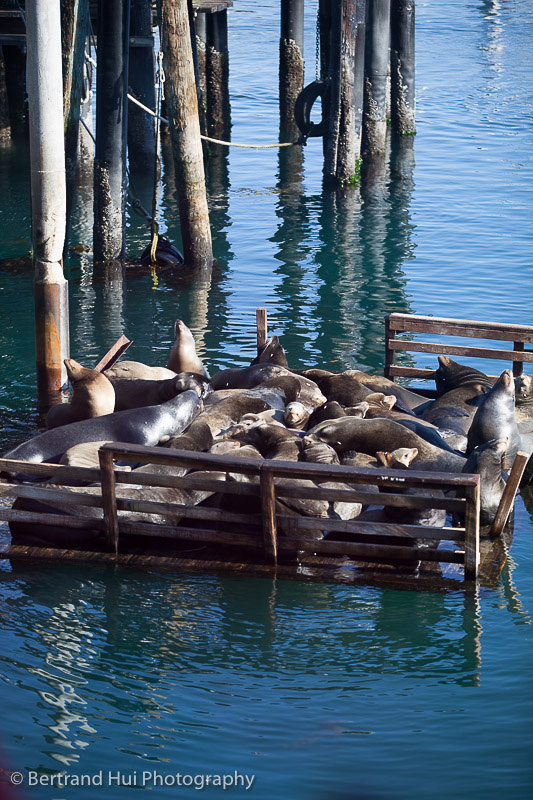 sea lions sunbathing outside Fisherman's Wharf in Monterey, California